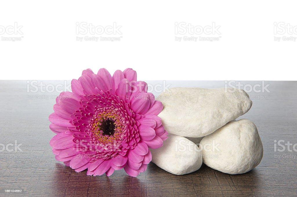 White rocks pink Gerbera on wood royalty-free stock photo