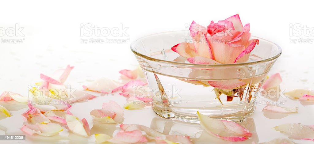 White Rose in a bowl of water and  petals. stock photo