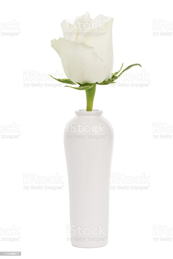 white rose in a vase stock photo