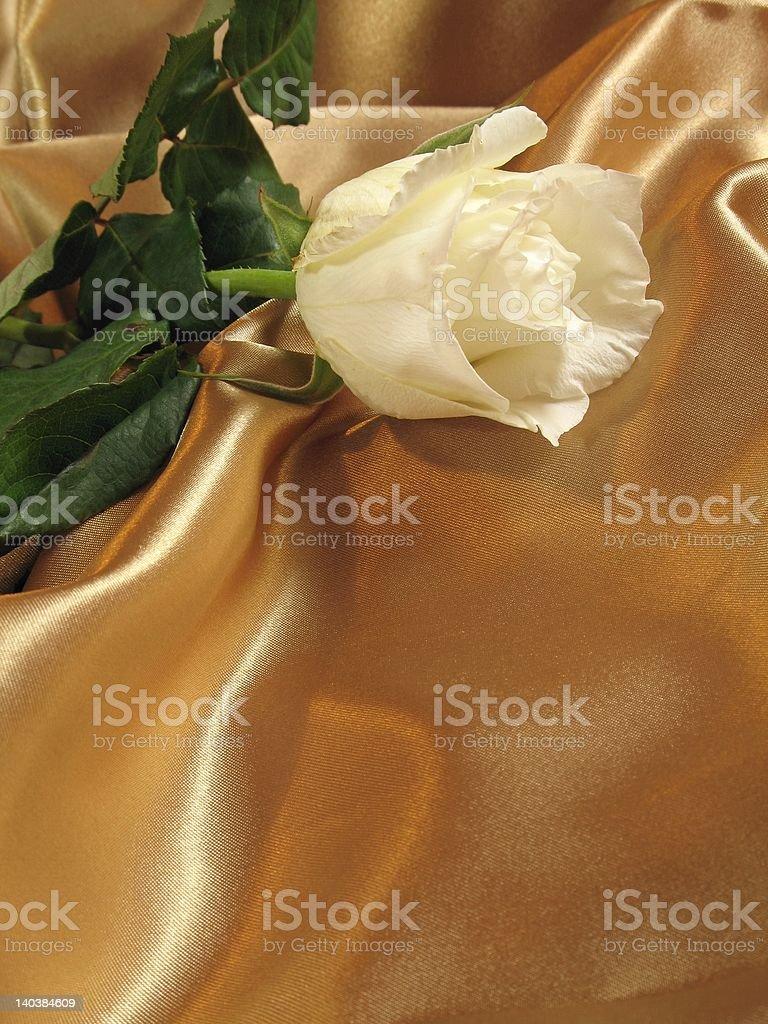 White rose on gold satin royalty-free stock photo
