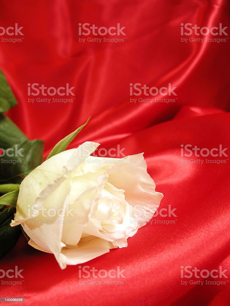 White rose on red satin royalty-free stock photo