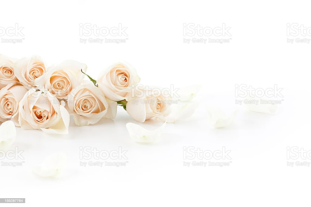 White Roses laying down royalty-free stock photo