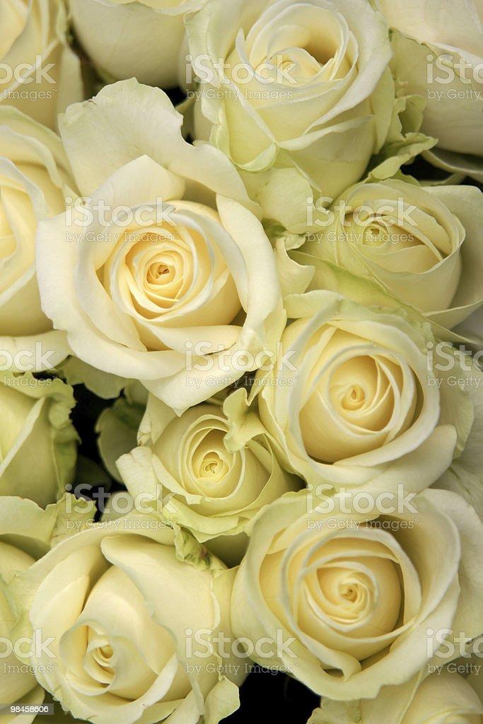 White roses royalty-free stock photo
