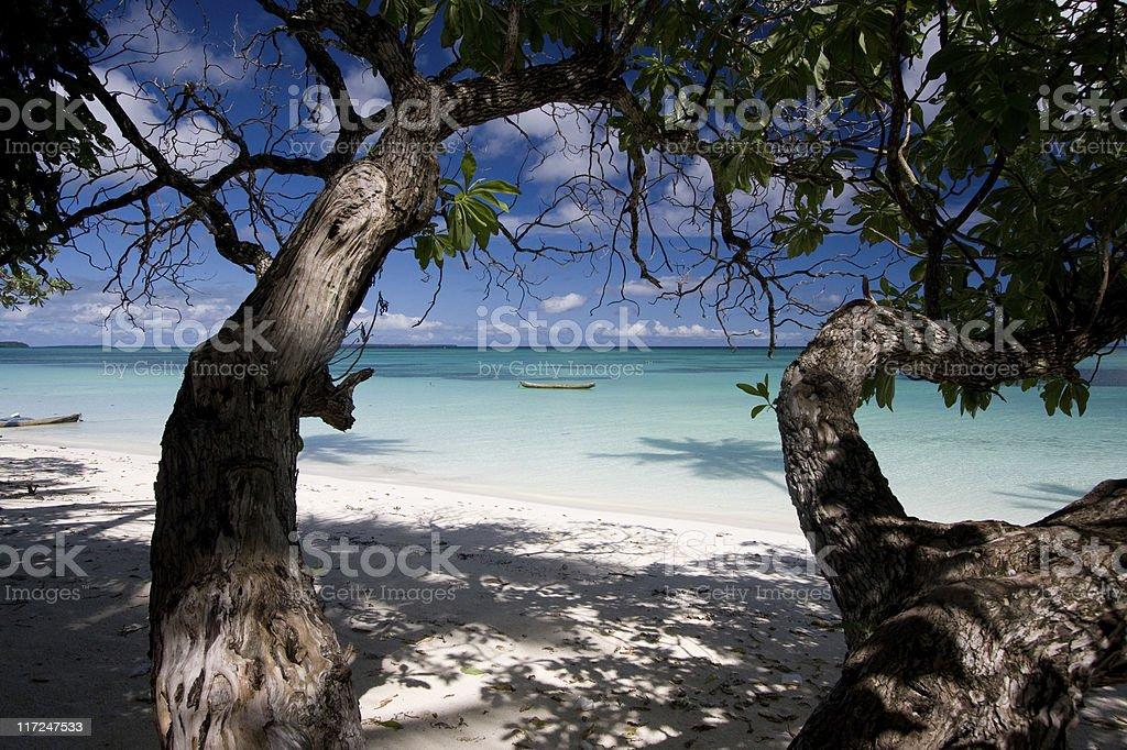 White sand beach and trees stock photo