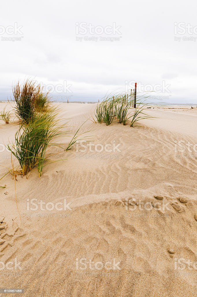 White sand dunes with a fence and grass. stock photo