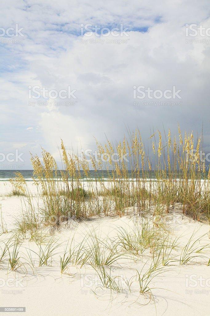 White Sand Florida Beach with Sea Oats stock photo
