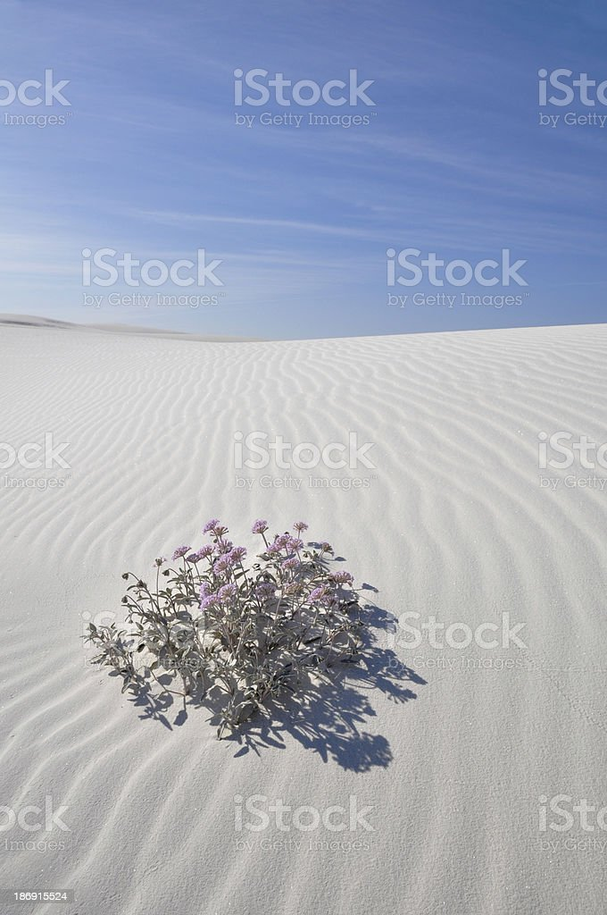 White Sands National Monument, New Mexico (USA) royalty-free stock photo