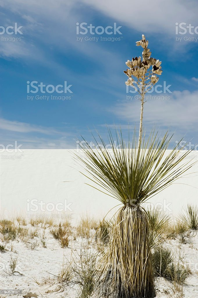 White Sands National Parks'  plant royalty-free stock photo