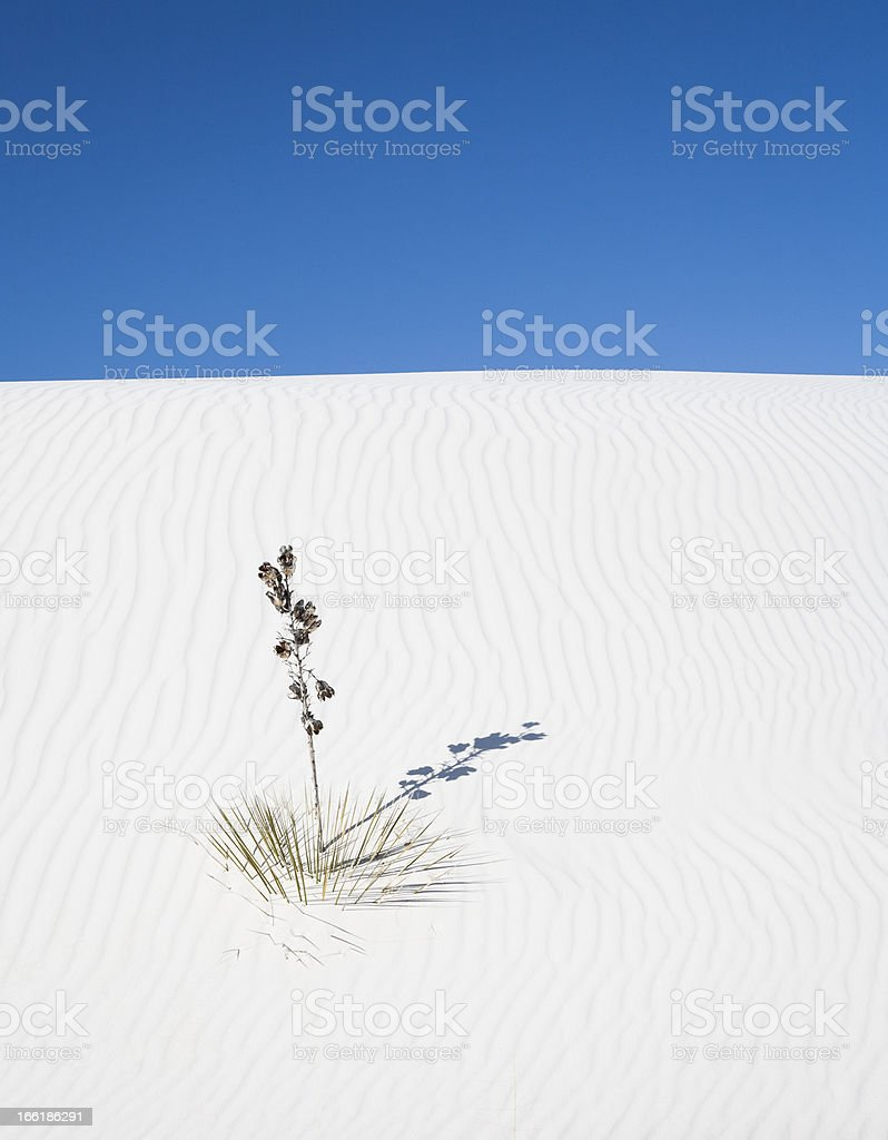 White Sands royalty-free stock photo