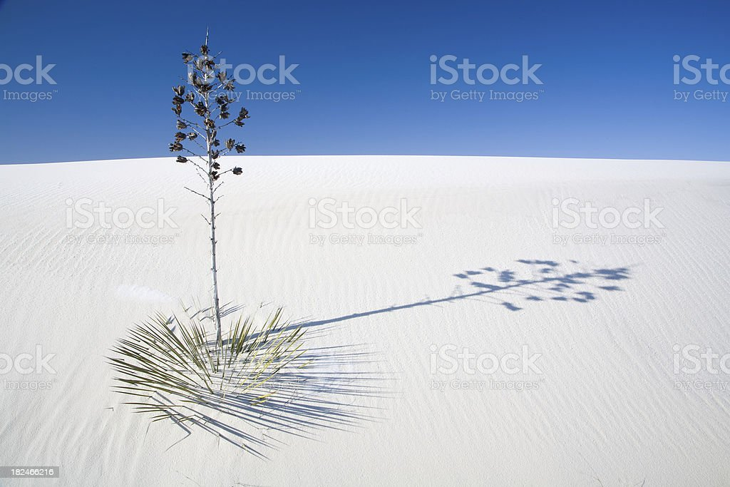 'White Sands Yucca, Dune, and Shadow' stock photo