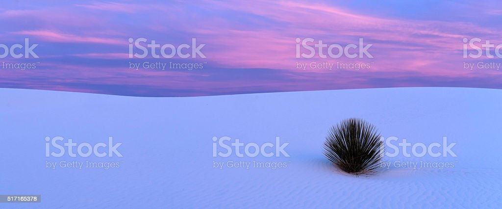 White Sands Yucca Panorama stock photo