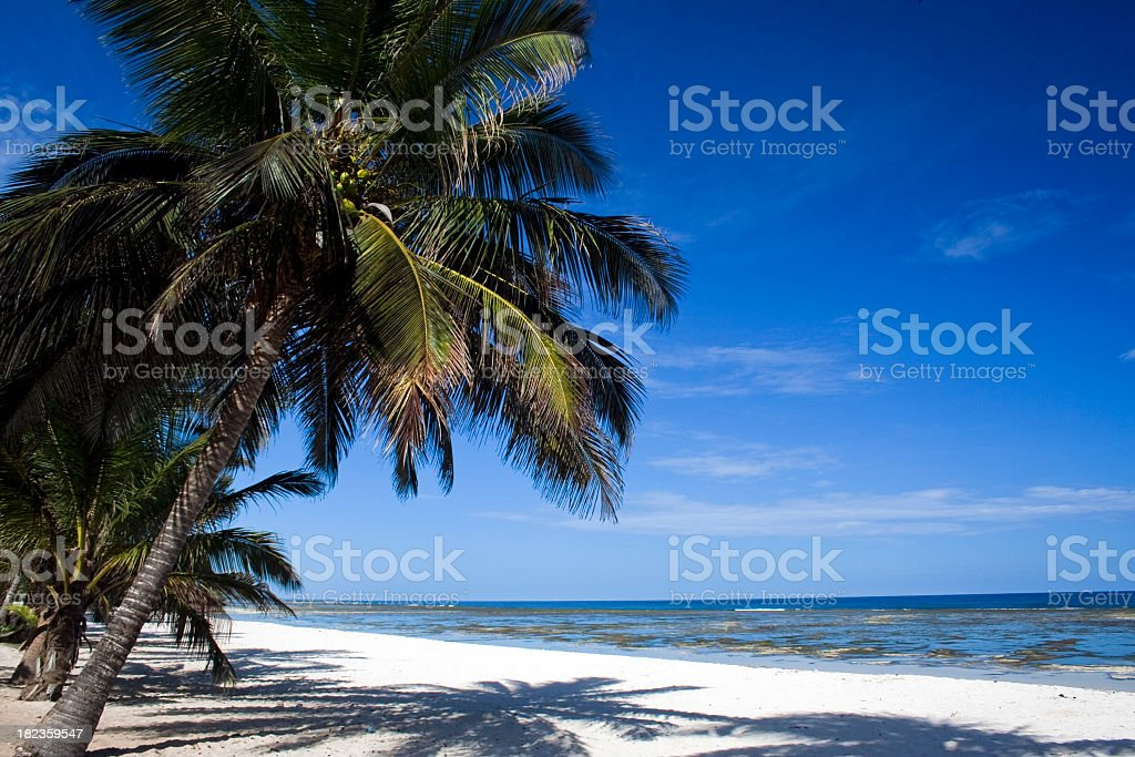 White sandy beach lined with palm trees stock photo