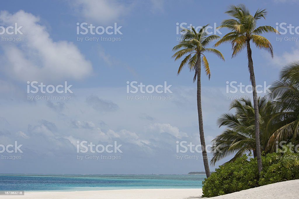 White Sandy Beach, Palm Trees in the Maldives royalty-free stock photo