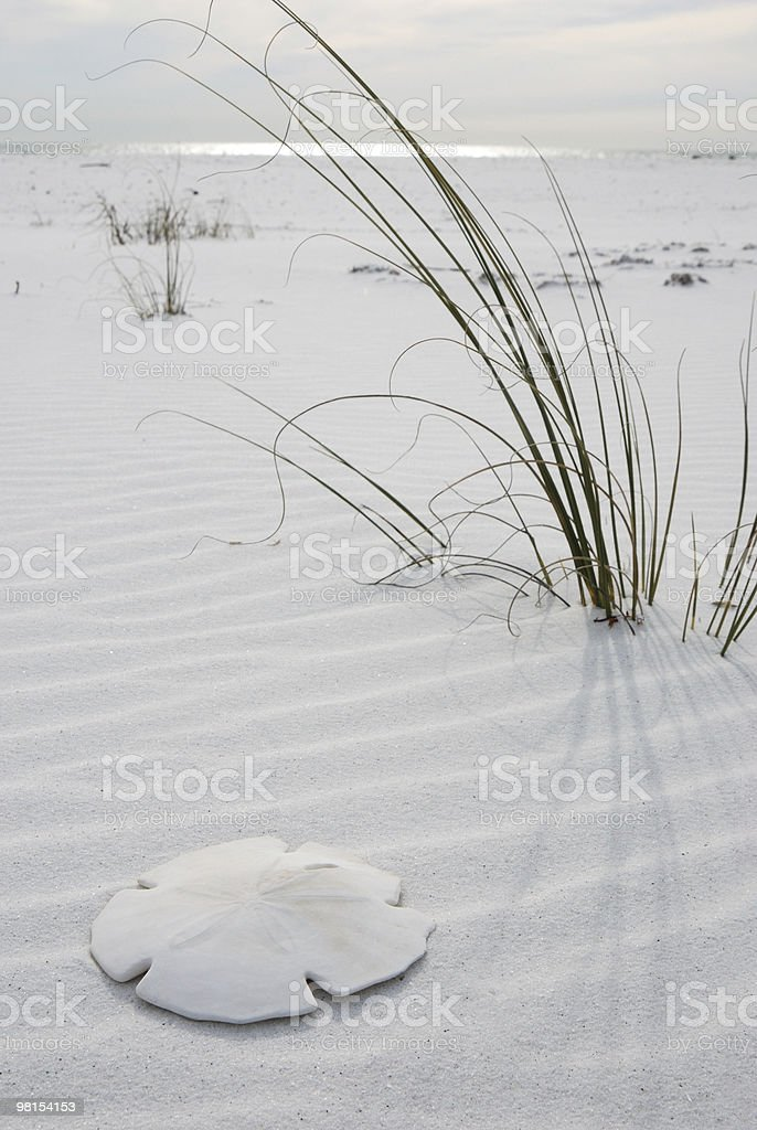 A white sandy beach with patches of reeds stock photo