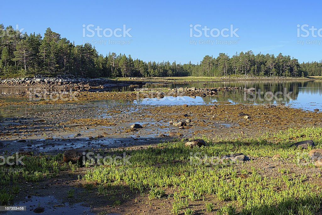 White Sea coast during the low tide, Solovetsky Islands, Russia stock photo
