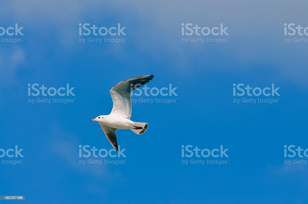 white sea gulls flying in the blue sunny sky stock photo