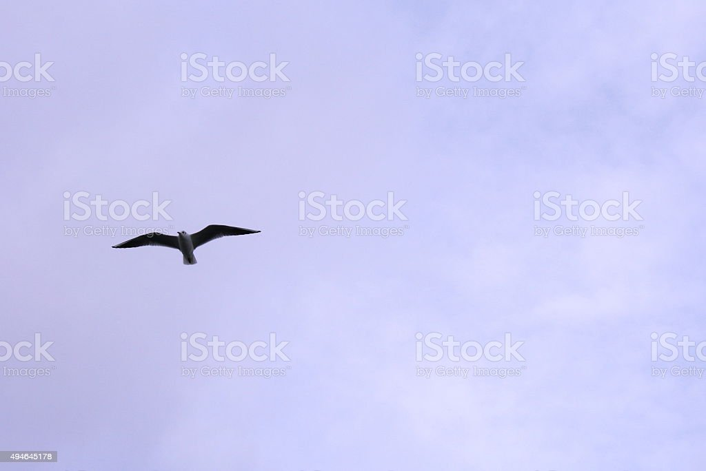 White seagull hovering in the sky royalty-free stock photo