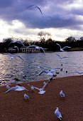 white seagulls in the park