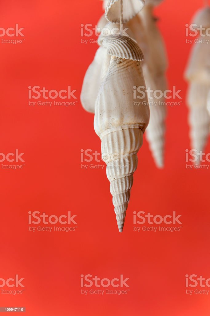 White seashell on red background vertical royalty-free stock photo