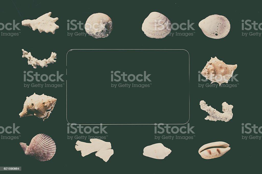White seashells on black background stock photo