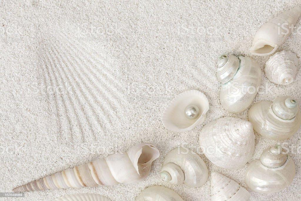 White seashells stock photo
