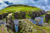 White sheep grazing on the cliff
