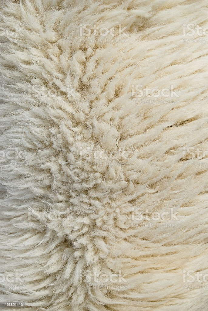 White Sheep wool royalty-free stock photo