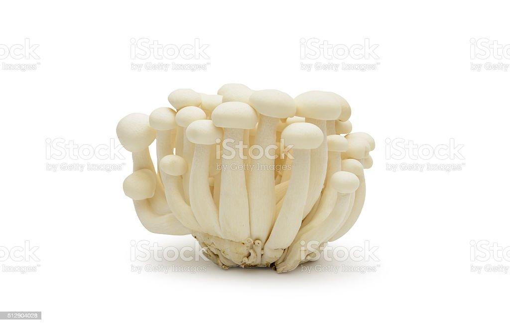 White shimeji mushrooms  on white background stock photo