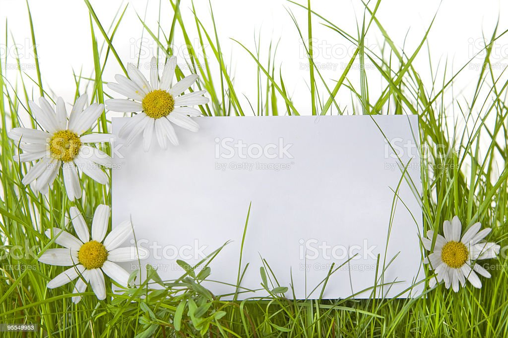 White sign in the midst of daisies stock photo