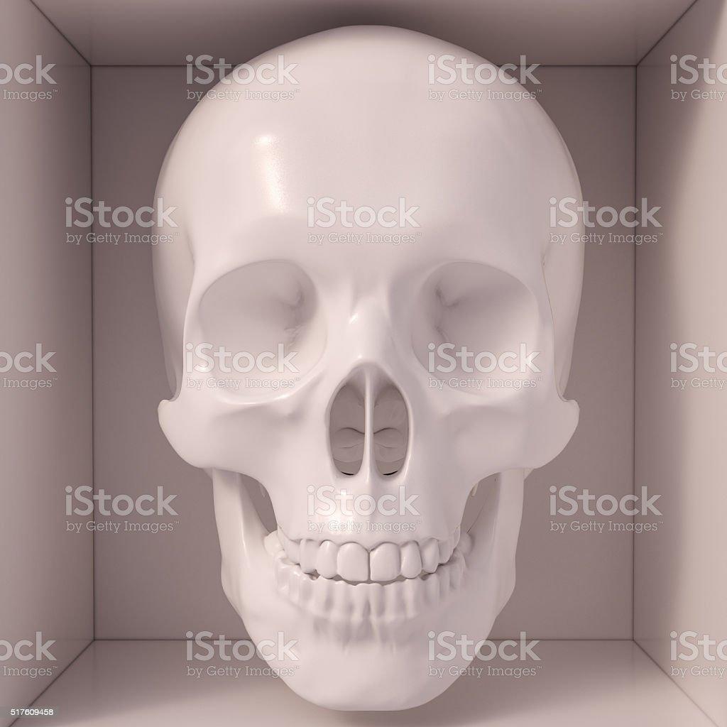 White skull stock photo