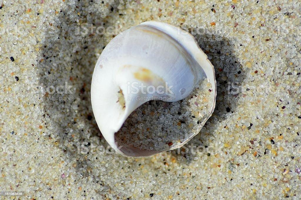 Blanc Escargot Shell photo libre de droits
