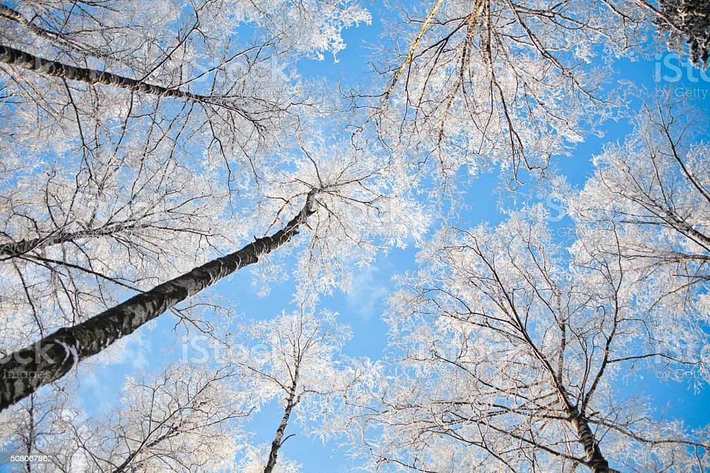 White snow-covered tree branches against the blue sky stock photo
