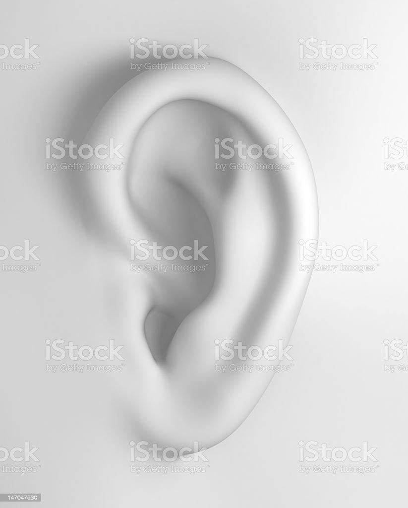 White Soft Ear stock photo