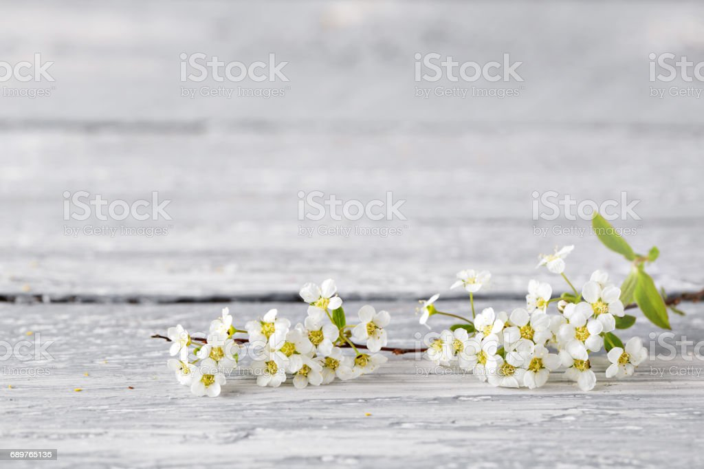 White spirea gray on wood background. selective focus. Copy space stock photo