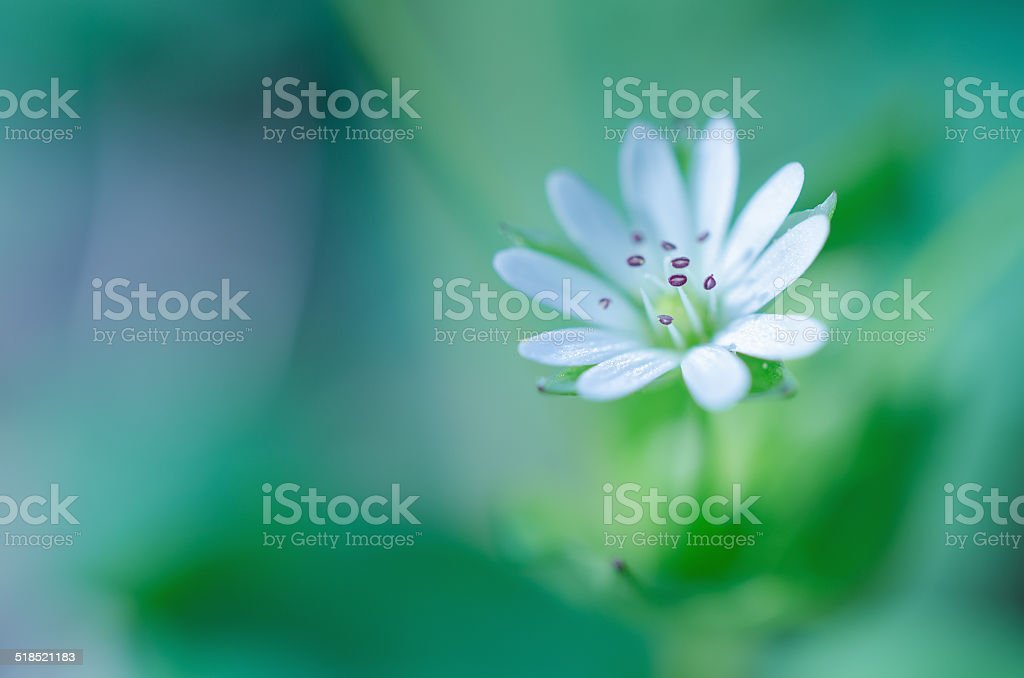 White spring flower - abstract stock photo