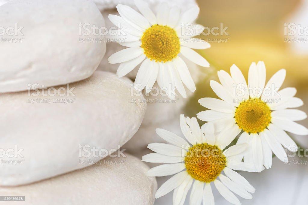 white stones and daisies stock photo