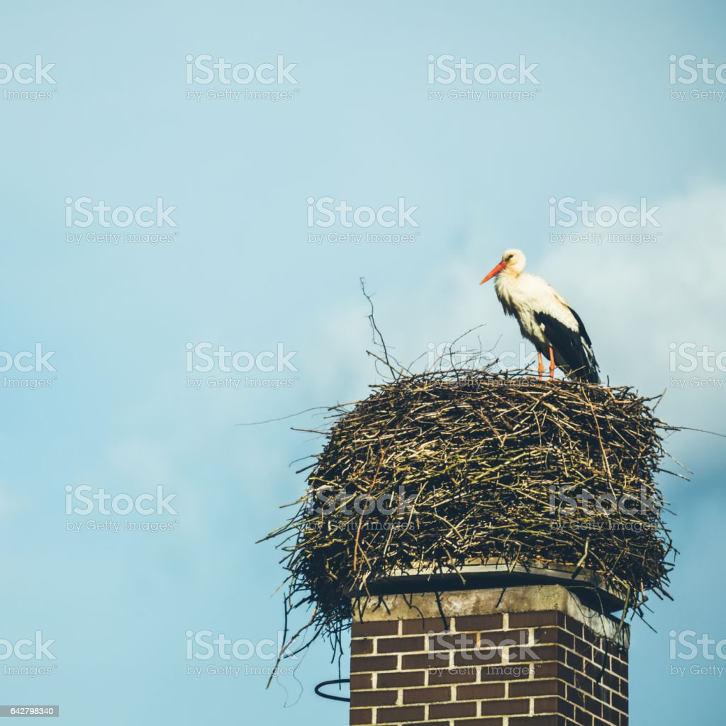 White stork in his nest in the sky stock photo