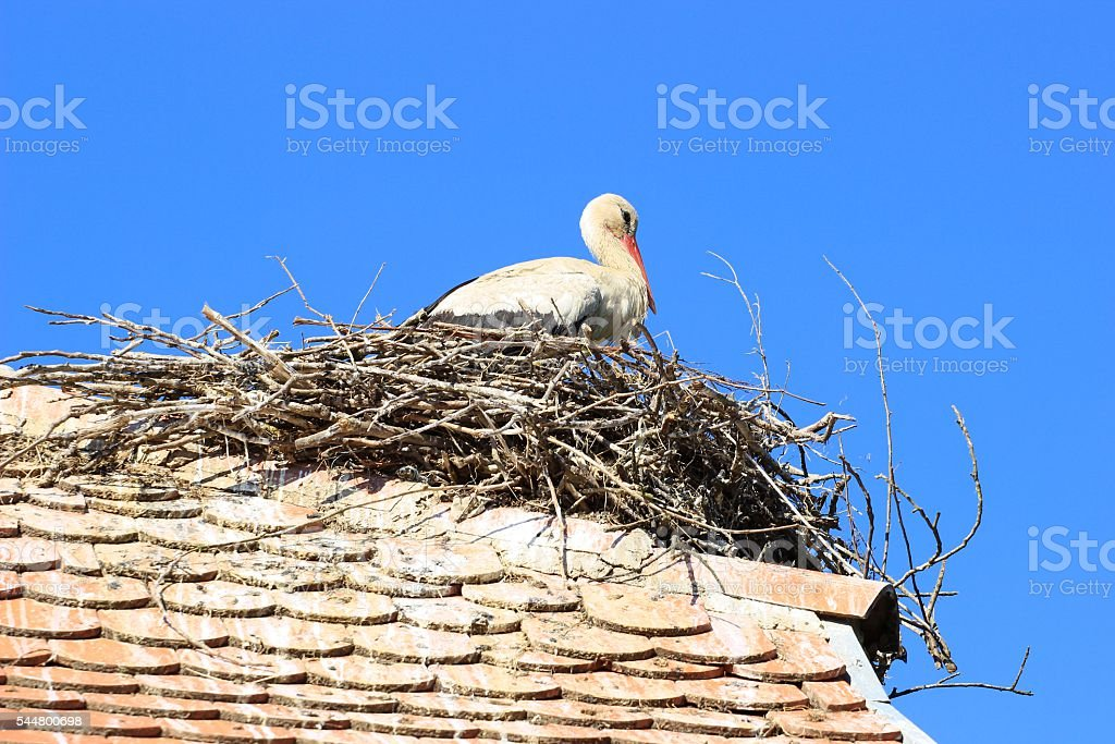 White stork in nest stock photo