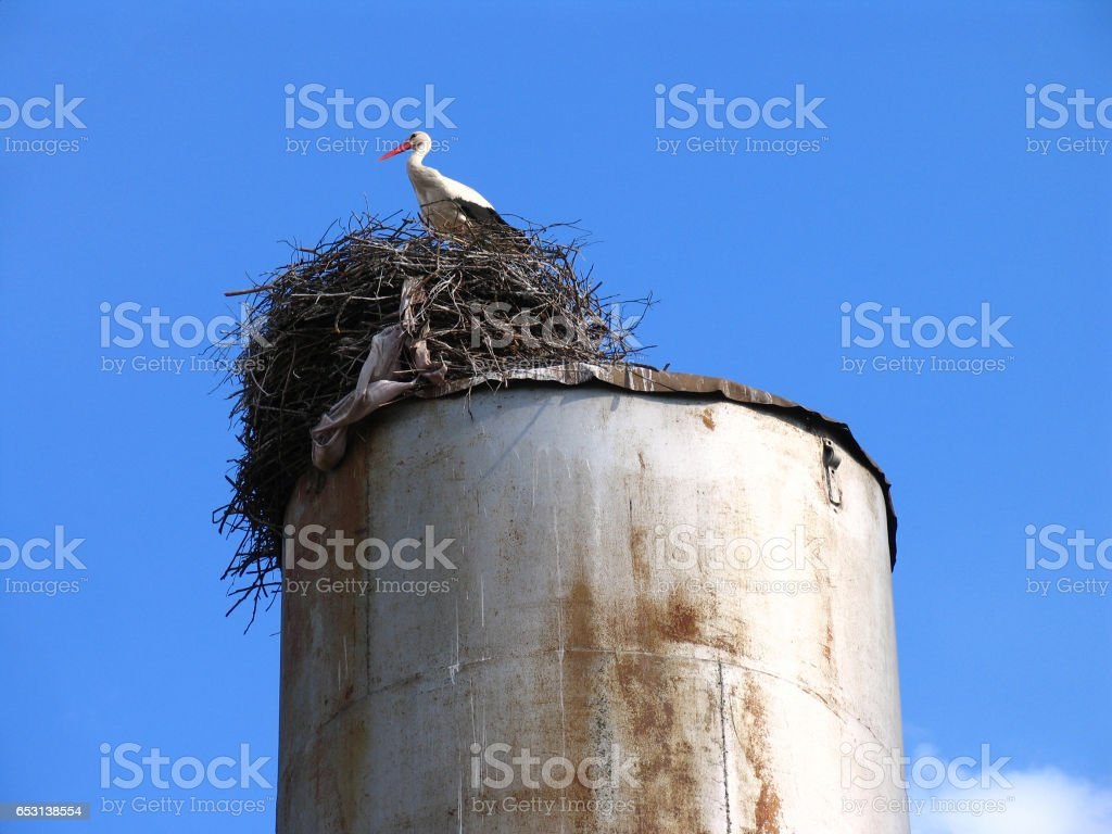 White stork (Ciconia ciconia) in the nest on a blue sky background stock photo