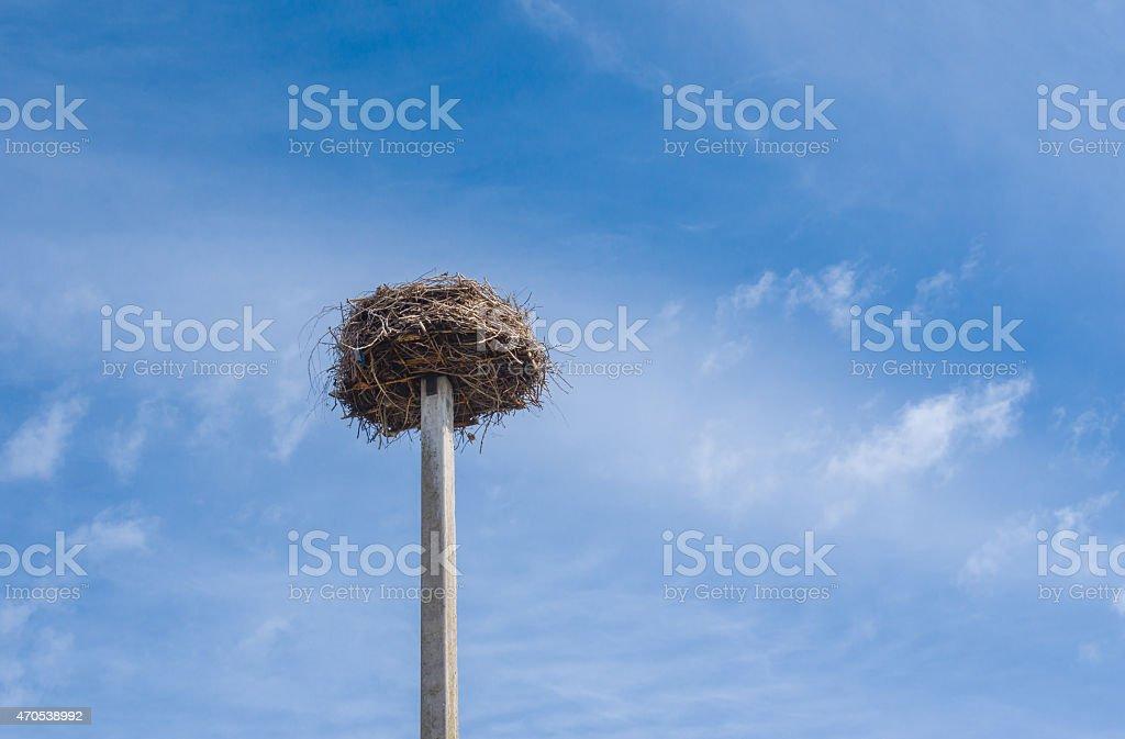 White stork nest stock photo