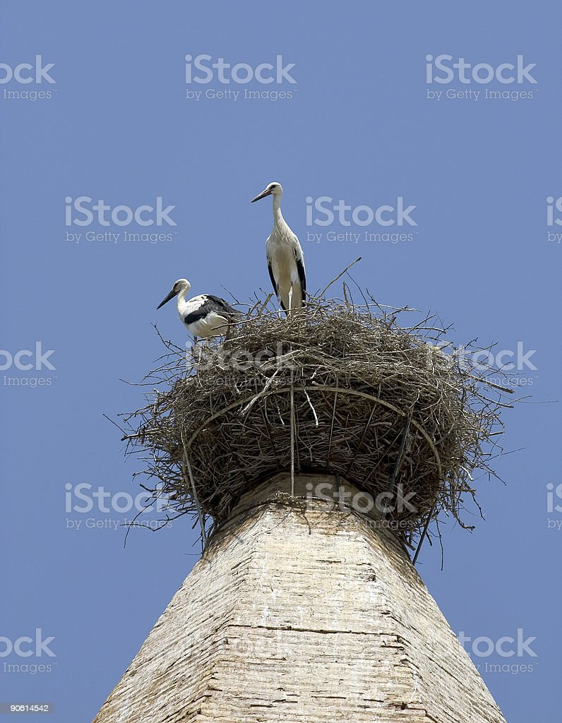White storks in Huesca, Spain royalty-free stock photo