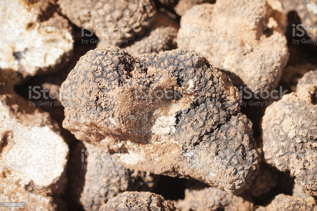 white summer truffles at a market in Provence, France stock photo