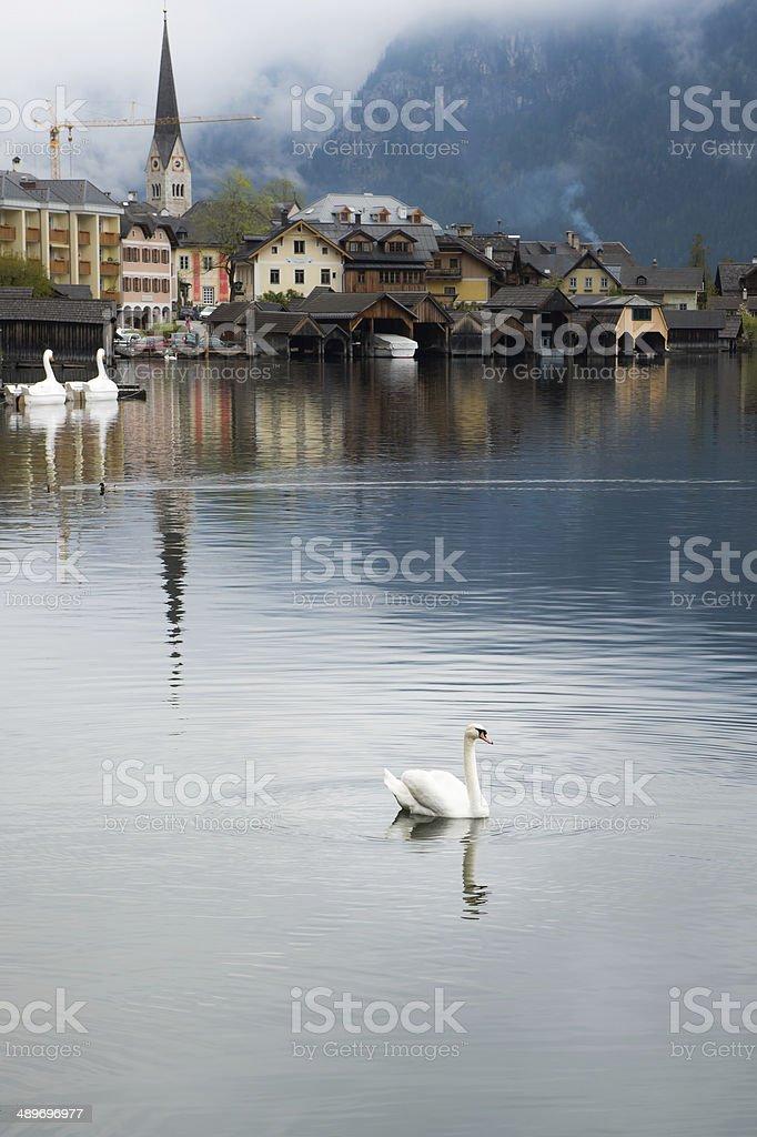 white swan and Heritage View,AUSTRIA stock photo