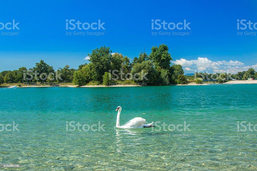 White swan on Jarun lake in Zagreb, Croatia stock photo