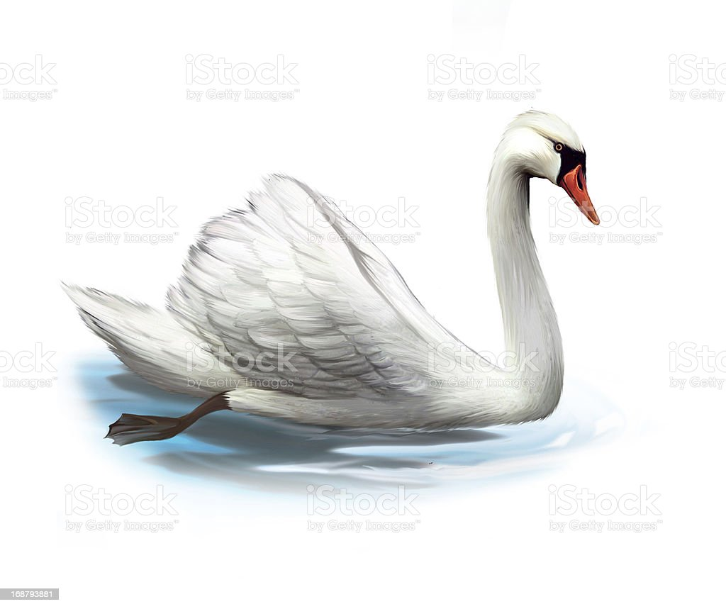 White swan on the water royalty-free stock photo