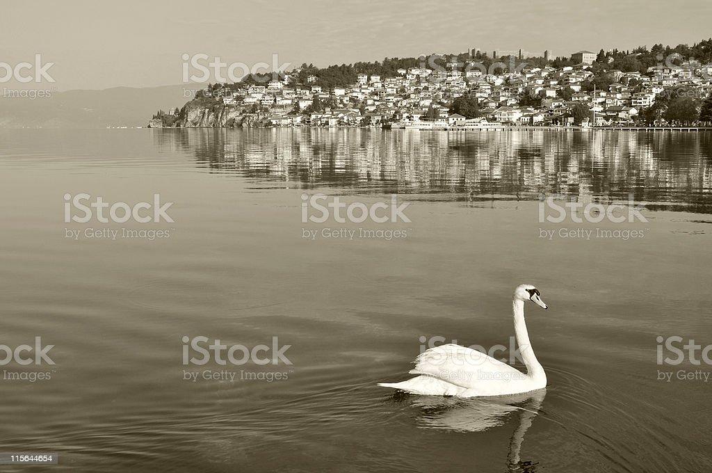White Swan Visiting Ohrid Macedonia royalty-free stock photo
