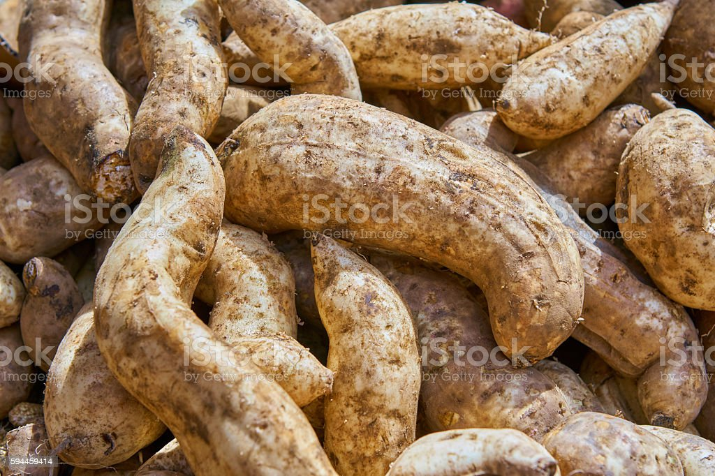 White sweet potatoes stock photo