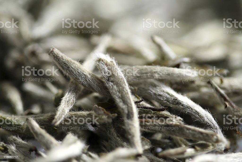 White tea close up stock photo