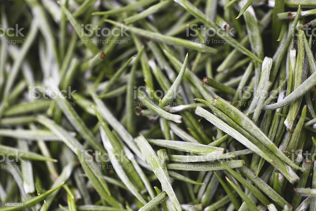 White tea crop royalty-free stock photo
