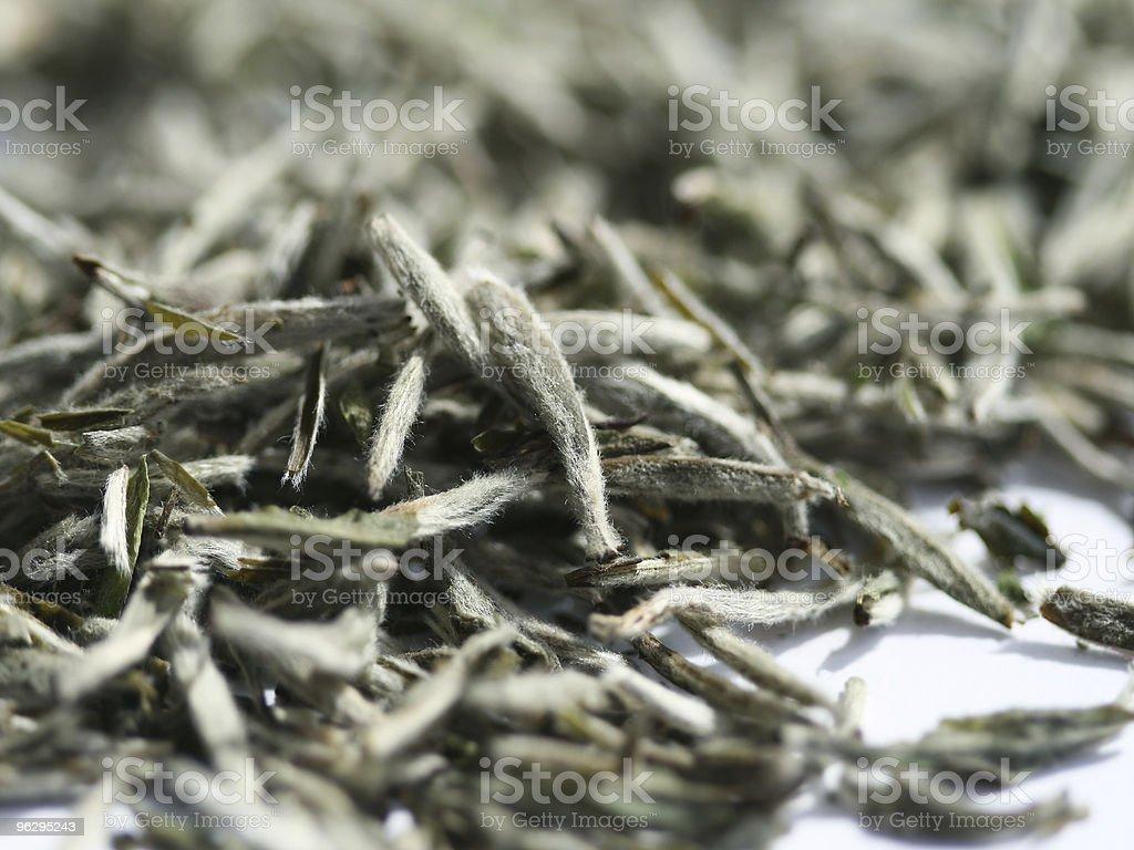 White tea stock photo